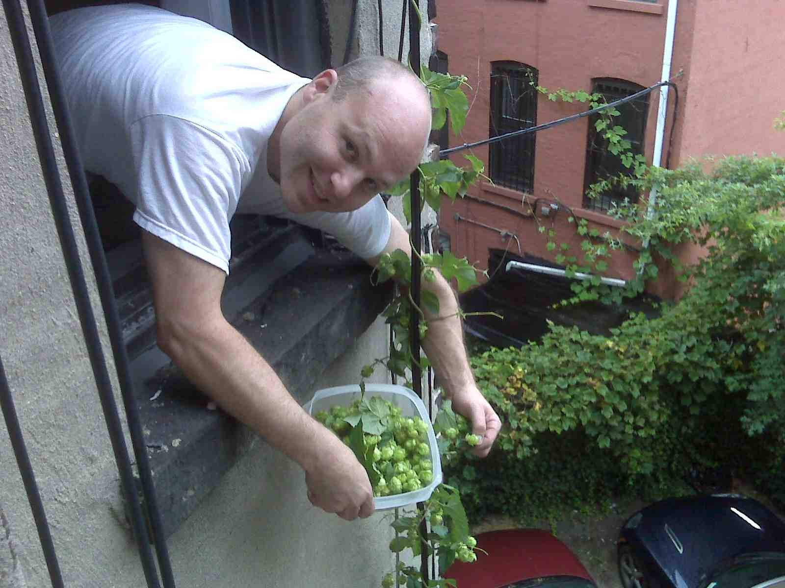 Brad Hillman reaps the bounty of Brooklyn's hops harvest