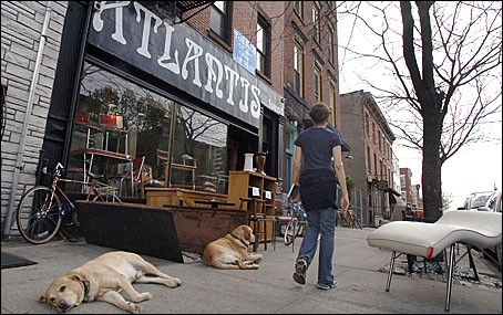 The dogs of Red Hook await their next tasty meal.
