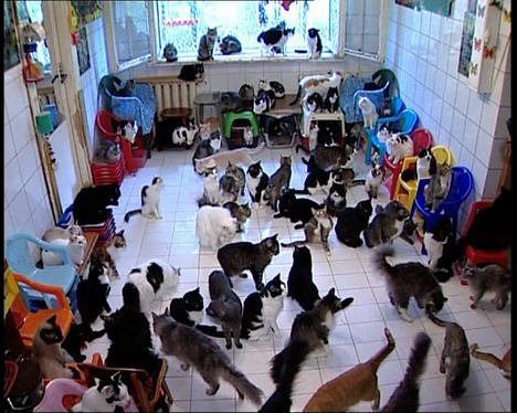 Officially: Too many cats.
