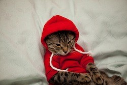 hipster_cat