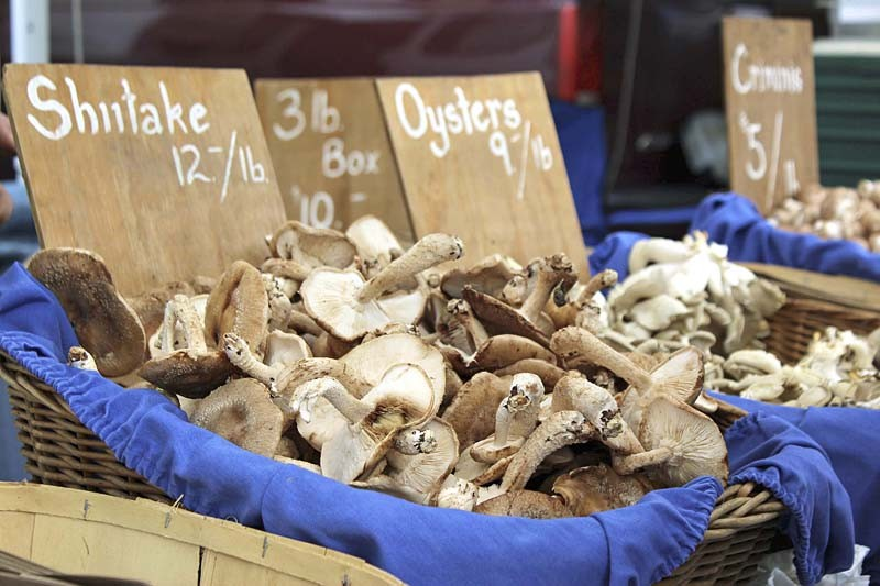 Bulich mushrooms are Greenmarket staples.